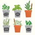 おしゃれなプランターや人気の植木鉢が見つかる。おすすめ通販サイト集