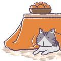 おしゃれなこたつ敷き布団も人気。おすすめの通販サイト集【長方形・正方形】